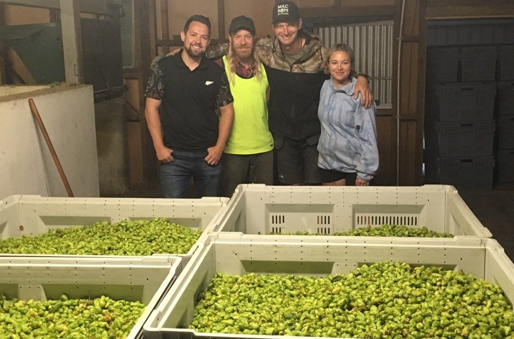 Huge year for fresh hop