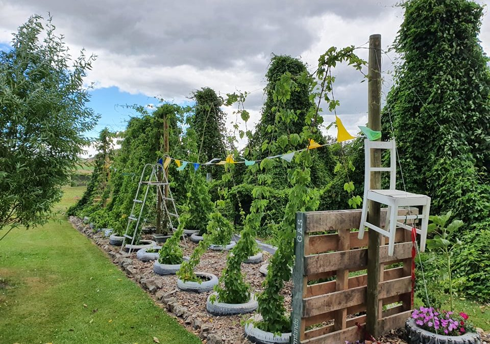The Miracle of Southland's Holy Hops